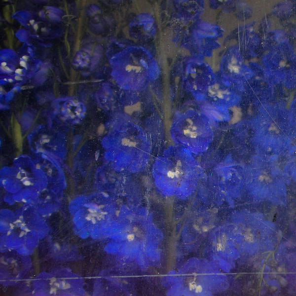 Old Masters Art Print featuring the photograph Delft Blues by Lynn Wohlers