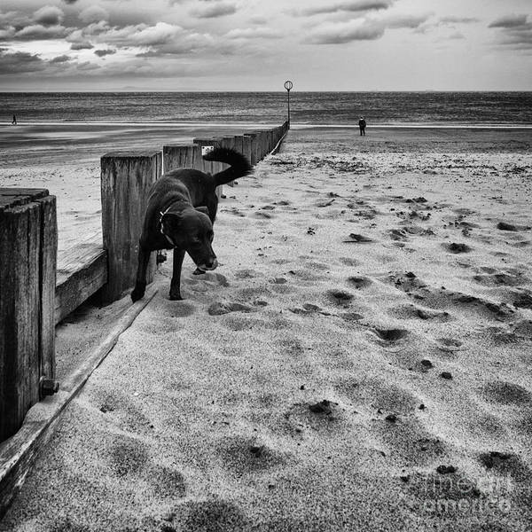 Back And White Art Print featuring the photograph Doing What Dogs Always Do by John Farnan