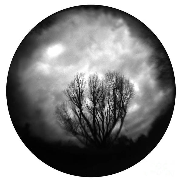 Tree Art Print featuring the photograph Eye Of The Storm by Paul Anderson