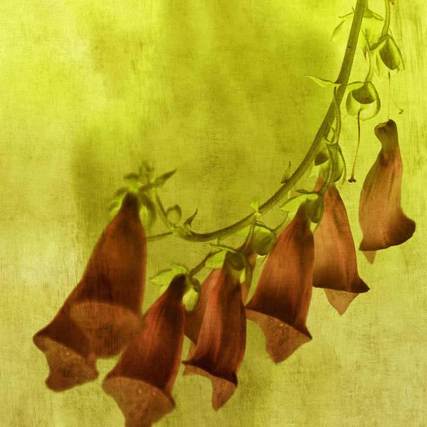 Tangerine Tango Art Print featuring the photograph Fancy Foxglove by Bonnie Bruno