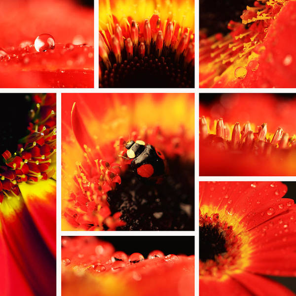 Blumen Collage Art Print featuring the photograph Floral Collage by Falko Follert