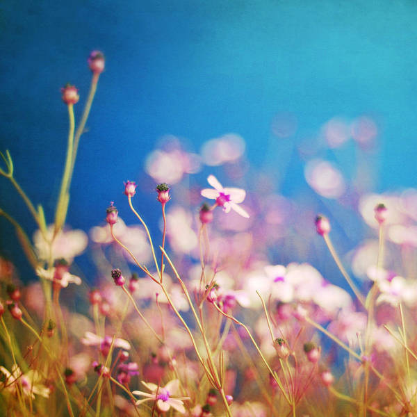 Impressionistic Floral Print Art Print featuring the photograph Infatuation In Blue by Amy Tyler