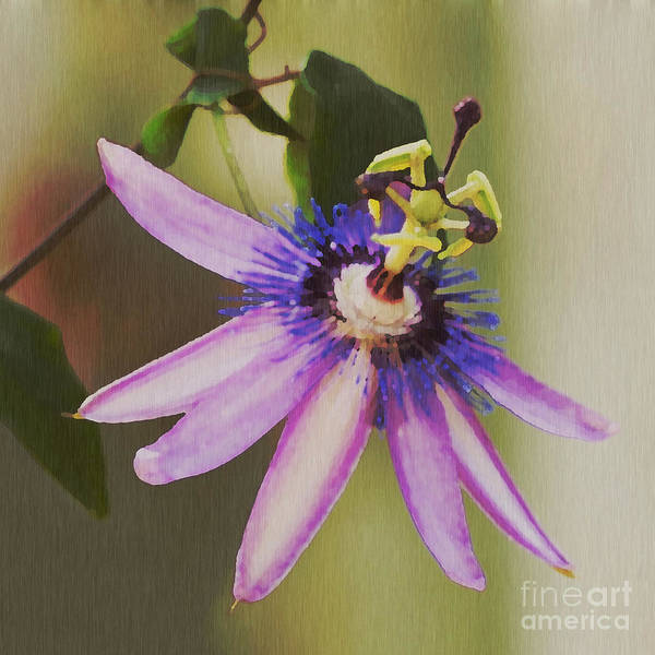 Passion Flower Art Print featuring the painting Passion Flower by Artist and Photographer Laura Wrede