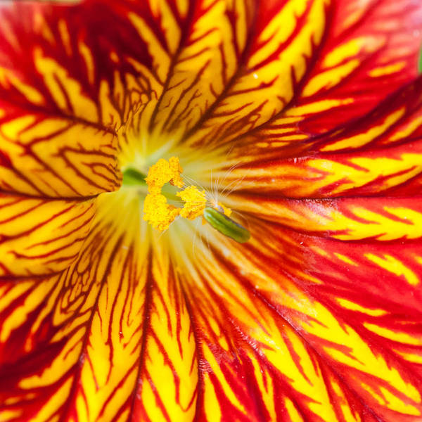 Square Art Print featuring the photograph Red And Yellow by Ian Grainger