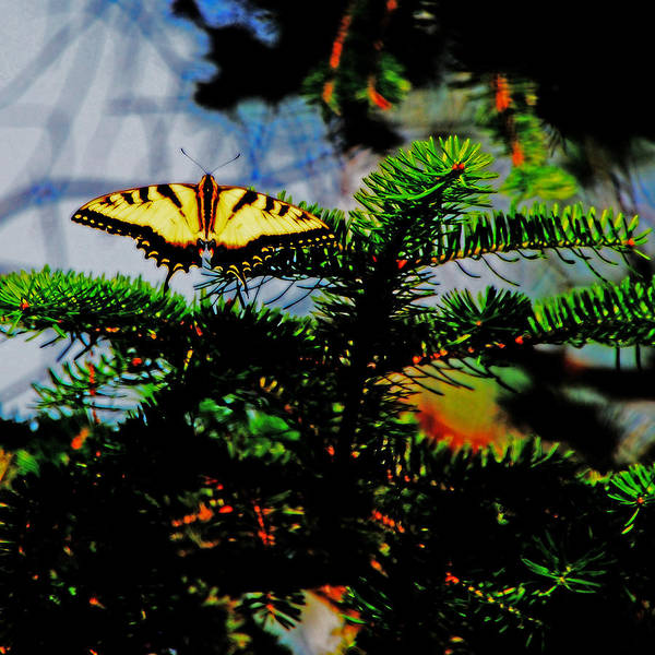 Butterfly Art Print featuring the photograph Restful Landing by Simone Hester