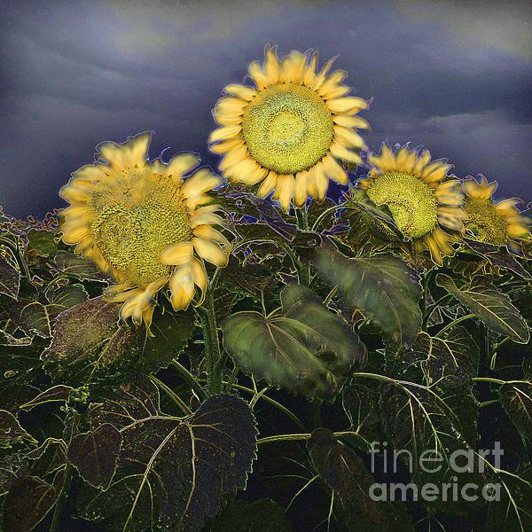 Sunflowers Digital Painting Art Print featuring the painting Sunflowers Digital Painting by Heinz G Mielke