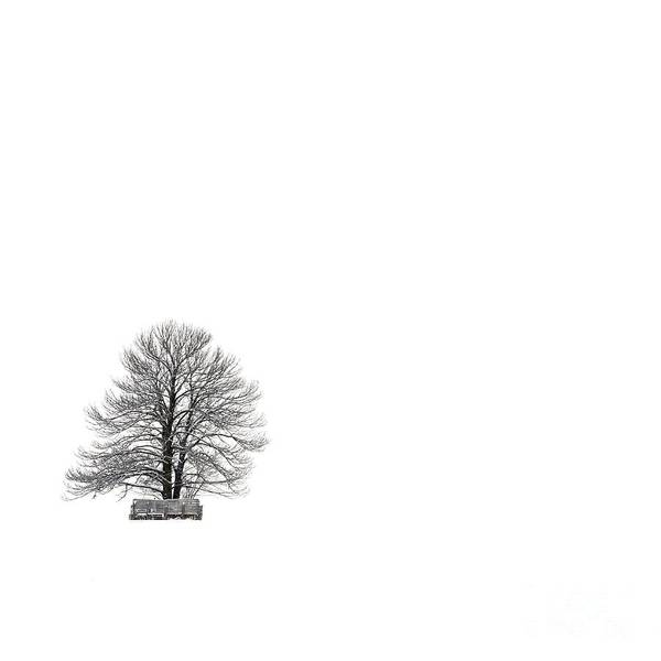 Landscape Print featuring the photograph Tree Isolated Under The Snow In The Middle Field In Winter. by Bernard Jaubert