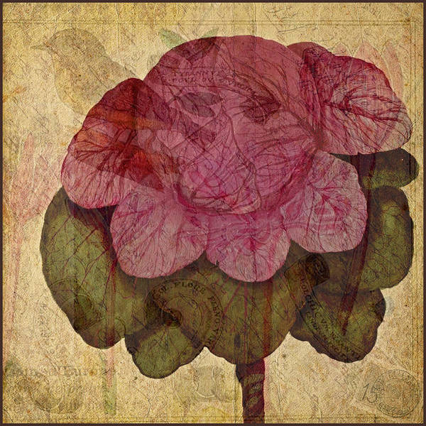 Digital Art Print featuring the photograph Vintage Cabbage by Bonnie Bruno