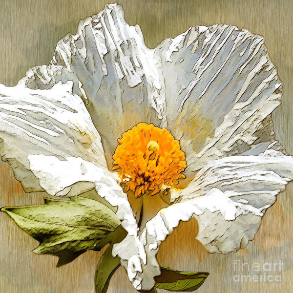 White Flower Art Print featuring the drawing White Paper Flower by Artist and Photographer Laura Wrede