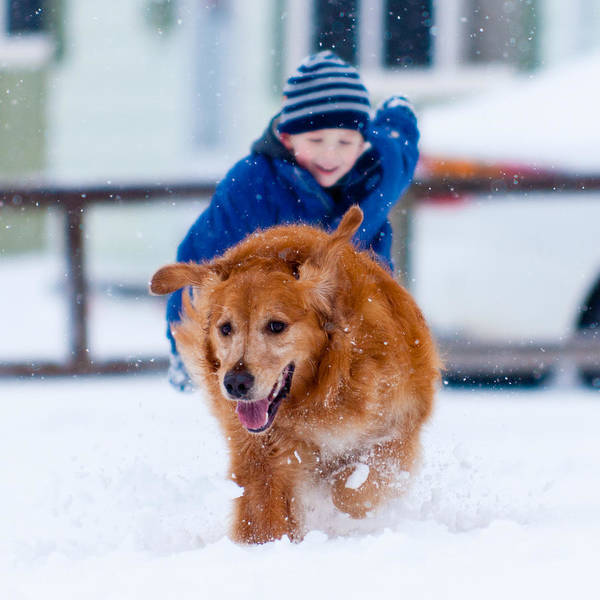 Dog Art Print featuring the photograph Winter Fun by Matt Dobson