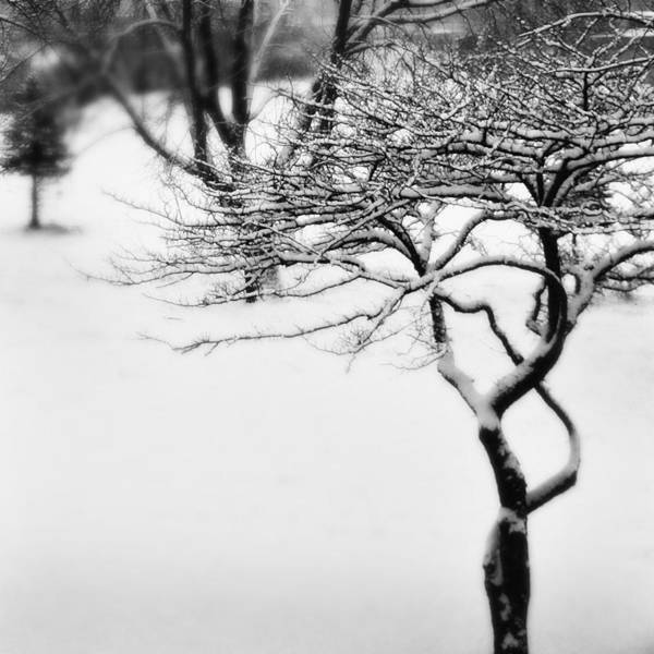 Tree Art Print featuring the photograph Winter Whisper by Simone Hester