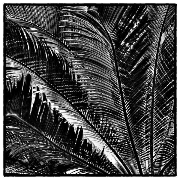 Fern Art Print featuring the photograph Fern IIi by David Patterson