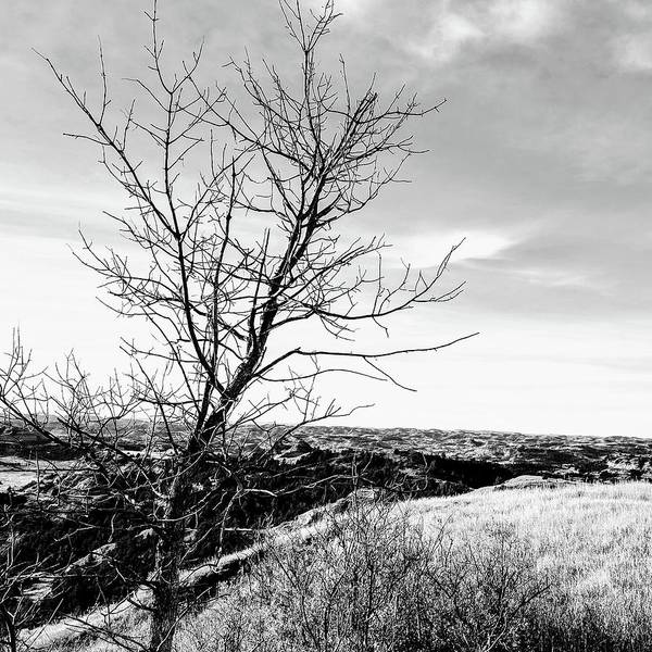 Rural Art Print featuring the photograph Landscape by Justin Parkinson