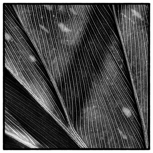 Plant Art Print featuring the photograph The Leaf by David Patterson