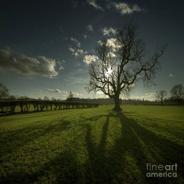 Tree Art Print featuring the photograph The Lonely Tree by Angel Ciesniarska