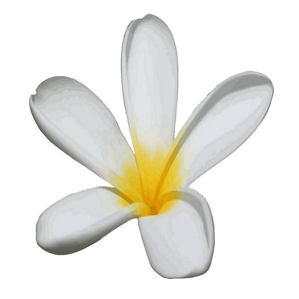 Plumeria Art Print featuring the digital art A Single Plumeria Flower Isolated by Taiche Acrylic Art
