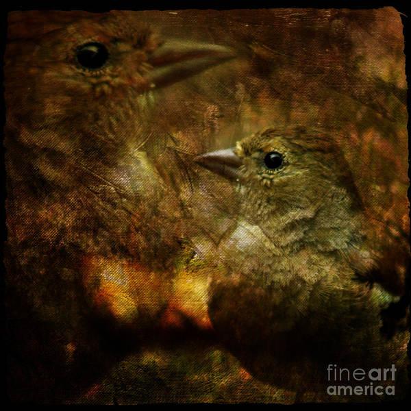 Sparrow Art Print featuring the photograph Birds by Angel Ciesniarska