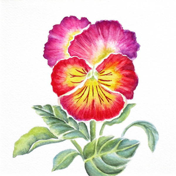 Bright Pansy Art Print featuring the painting Bright Pansy by Deborah Ronglien