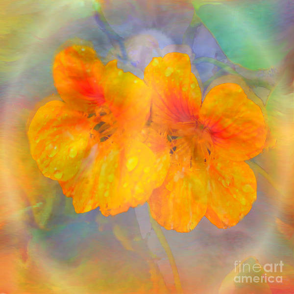 Nasturtiums Art Print featuring the painting Celebration Of Life. by Glenyss Bourne