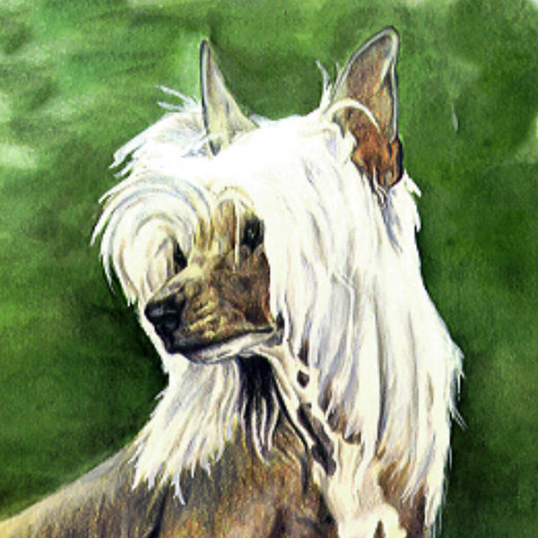 Art Art Print featuring the painting Chinese Crested by Kathleen Sepulveda