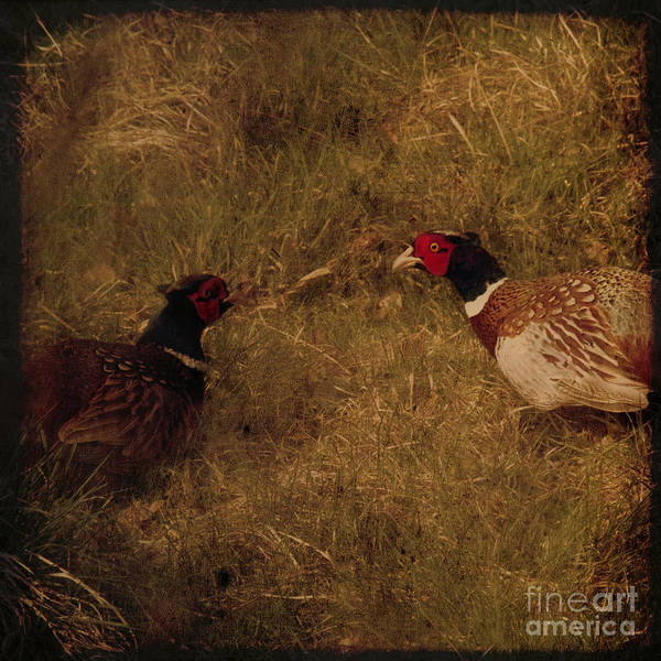 Pheasant Art Print featuring the photograph Conversations by Angel Ciesniarska