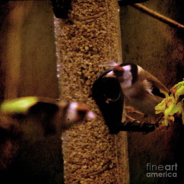 Feeder Art Print featuring the photograph Crazy Goldfinch by Angel Ciesniarska