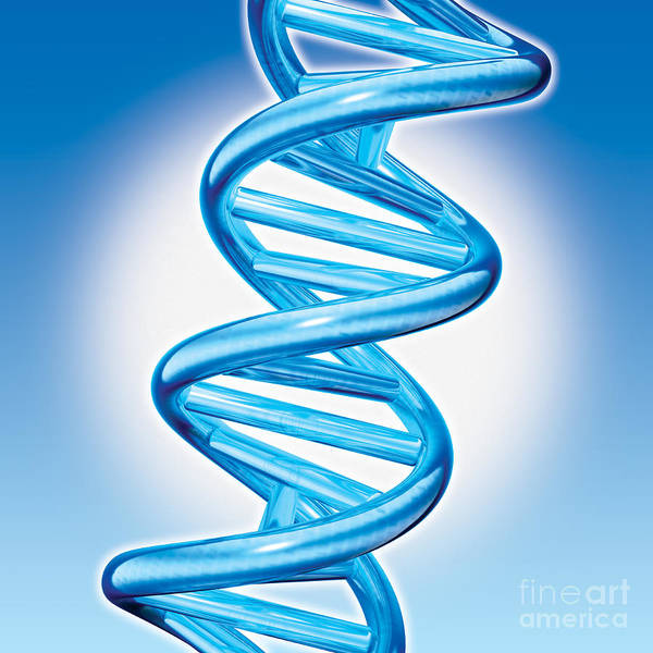 Dna Print featuring the digital art Dna Double Helix by Marc Phares and Photo Researchers
