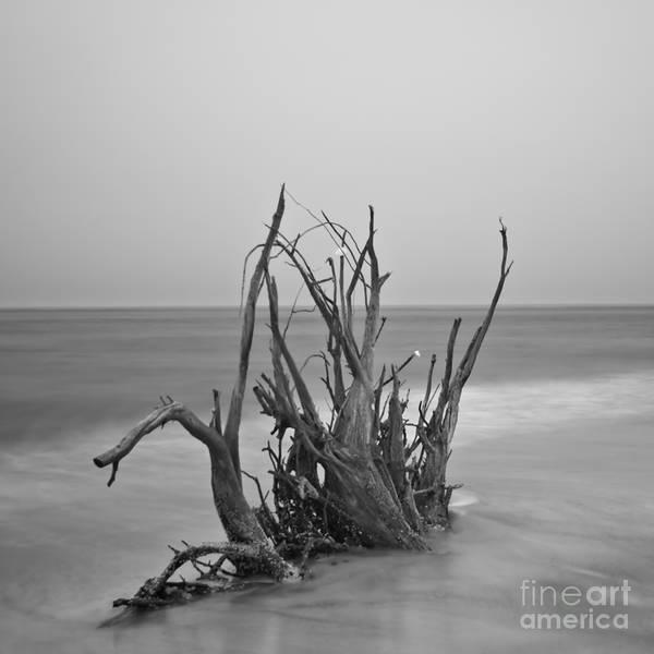 Driftwood Art Print featuring the photograph Driftwood Infrared 60 by Rolf Bertram
