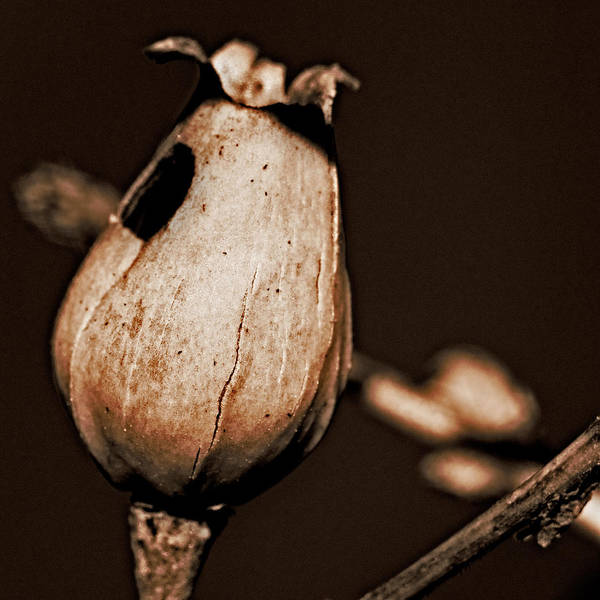 Close Up Art Print featuring the photograph Fl09 by Luigi Esposito