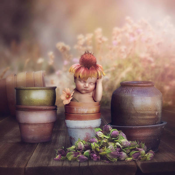 Flowers Art Print featuring the photograph Flower Baby by Cindy Grundsten