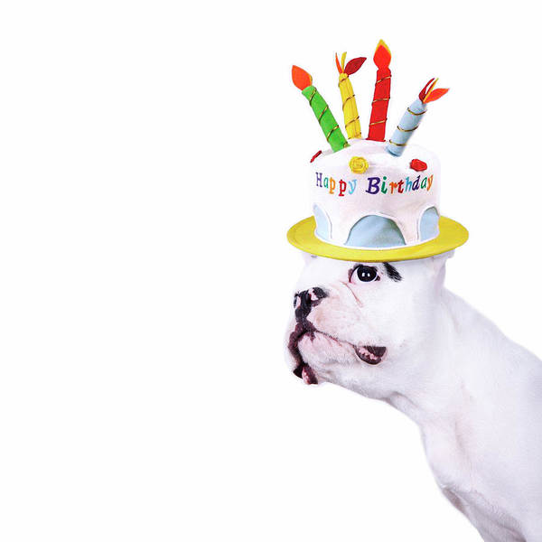 Square Print featuring the photograph French Bulldog With Birthday Cake by Maika 777
