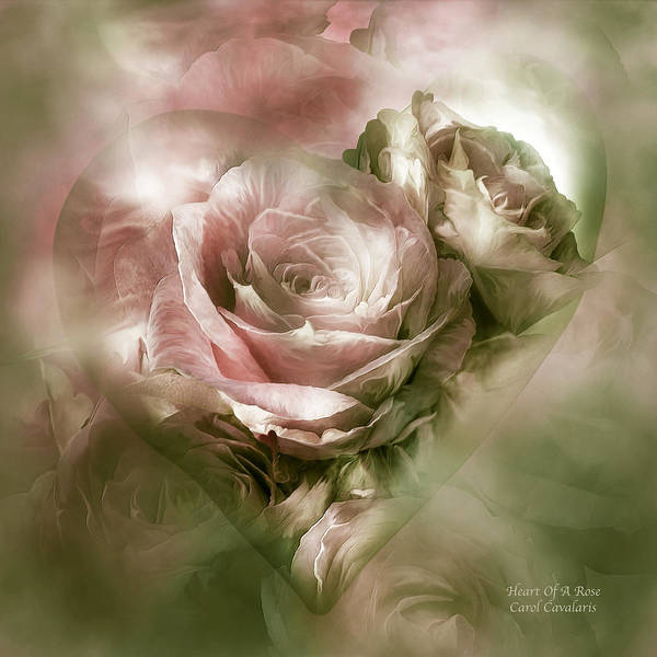 Rose Art Print featuring the mixed media Heart Of A Rose - Antique Pink by Carol Cavalaris