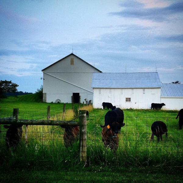 Summer Art Print featuring the photograph Hot Eve Night On The Farm by Rancher's Eye Photography