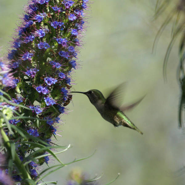 Hummingbird Art Print featuring the photograph Hummingbird Sharing by Ernie Echols