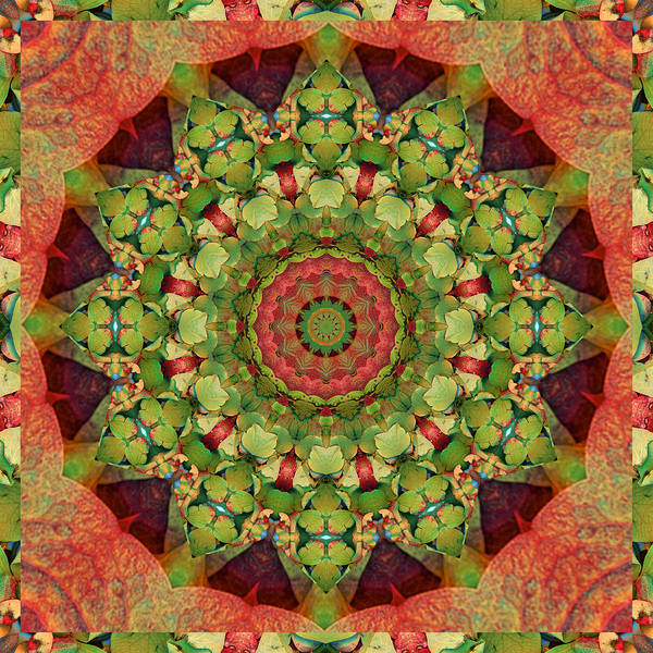Mandalas Art Print featuring the photograph Illumination by Bell And Todd
