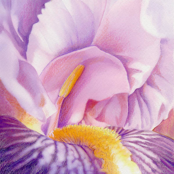 Flowers Art Print featuring the painting Inside Iris by Mindy Lighthipe