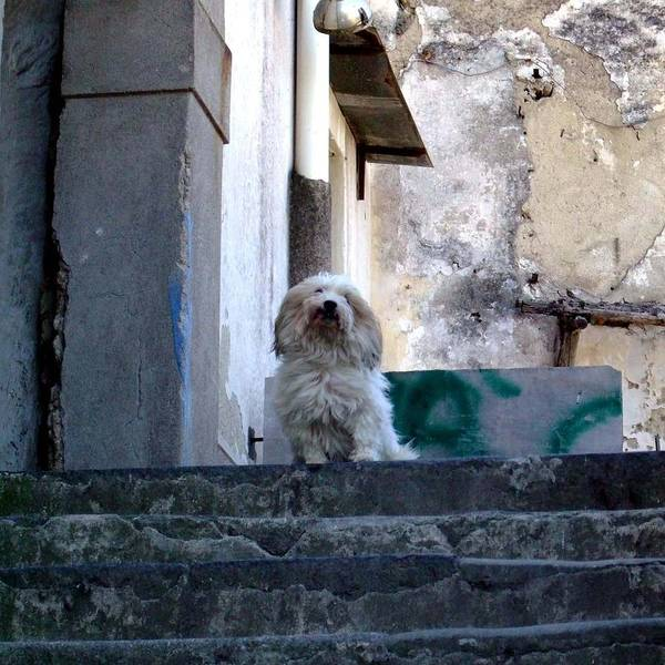 Capri Art Print featuring the photograph Italy's Capri Doggie by Mindy Newman