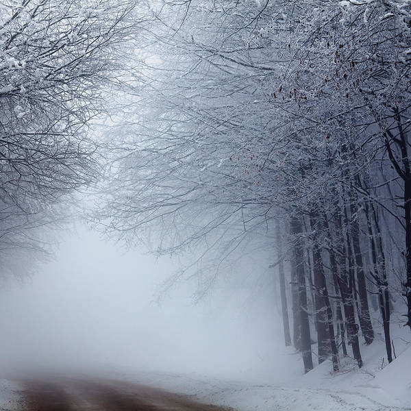 Fog Art Print featuring the photograph Lost Way by Evgeni Dinev