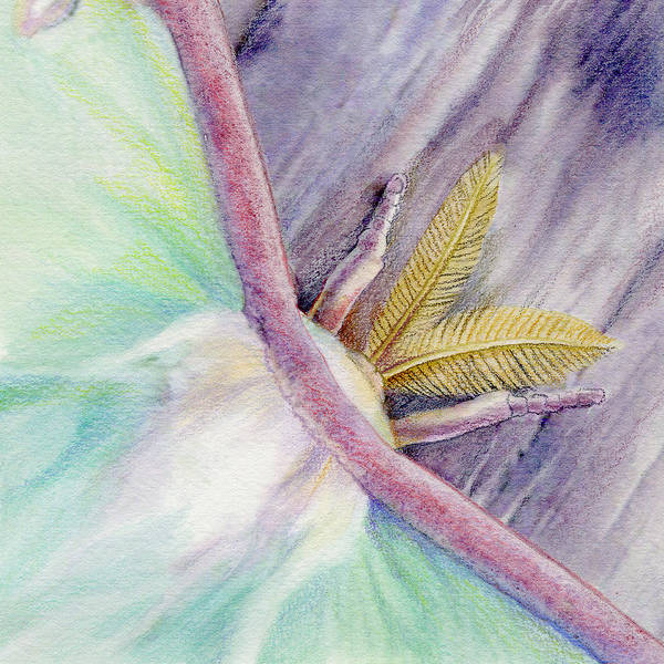 Luna Moth Art Print featuring the painting Luna Moth by Mindy Lighthipe