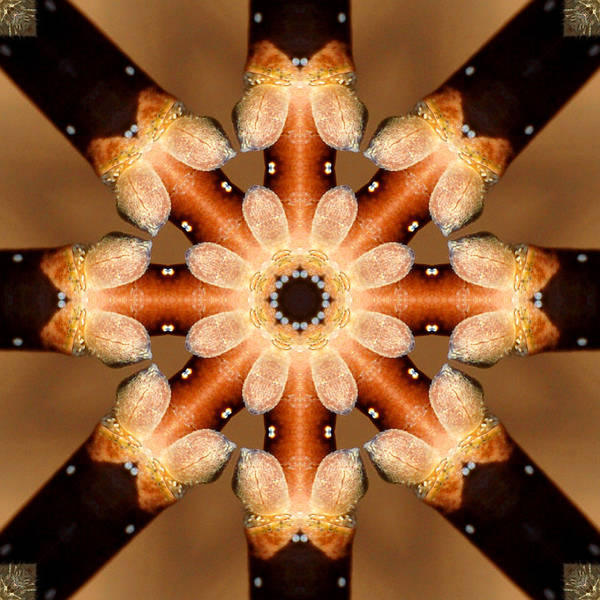 Kaleidoscope Art Print featuring the photograph Magnolia In Winter by Kathleen Stephens