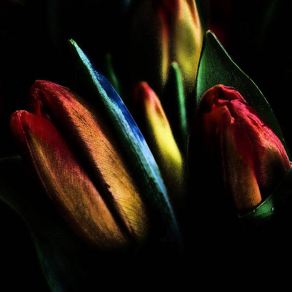 Tulips Art Print featuring the photograph Market Tulips by David Patterson