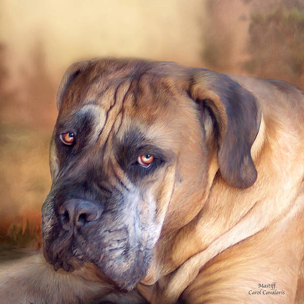 Mastiff Art Print featuring the mixed media Mastiff Portrait by Carol Cavalaris