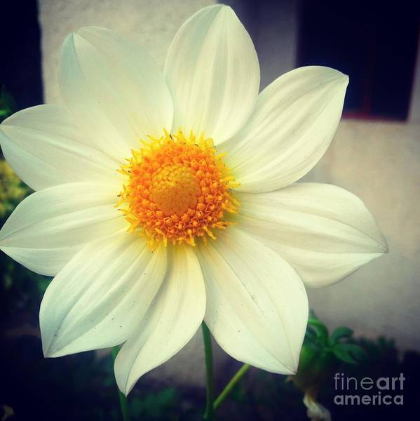Flower Art Print featuring the photograph Morning Flower by Image World