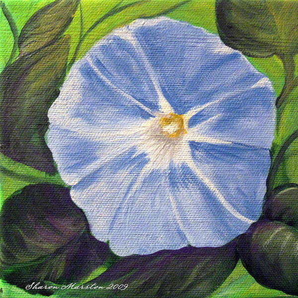 Morning Glory Art Print featuring the painting Morning Glory by Sharon Marcella Marston