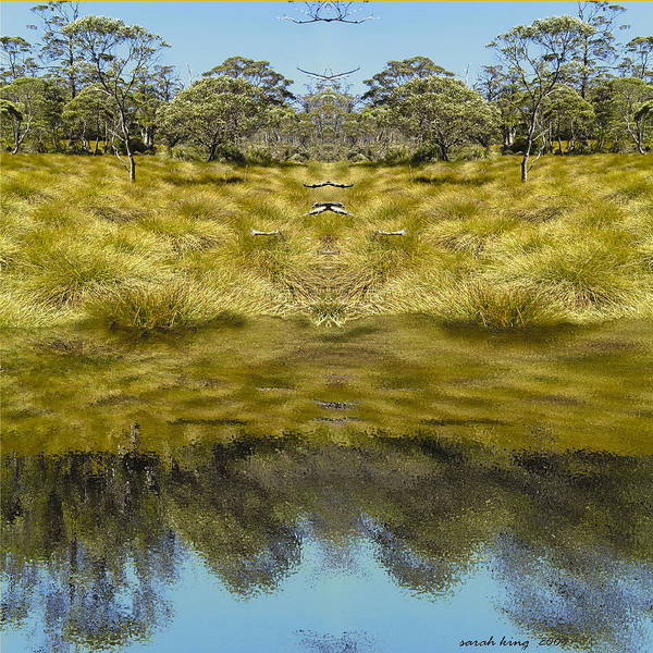 Button Grassland Art Print featuring the photograph Mountain Button Grass by Sarah King