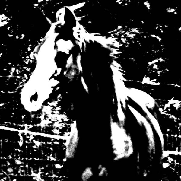 Horse Art Print featuring the photograph Only A Yearling by Donna Thomas