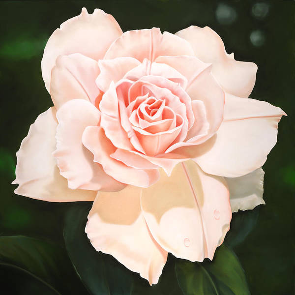 Flower Art Print featuring the painting Pale Pink Rose by Ora Sorensen
