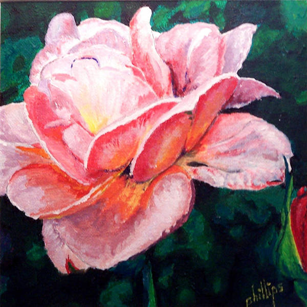Rose Art Print featuring the painting Pink Rose by Jim Phillips