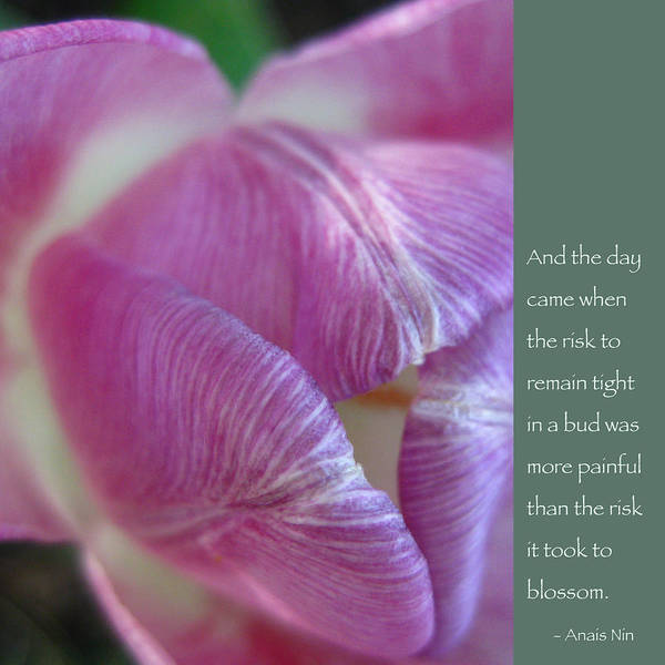 Tulip Art Print featuring the photograph Pink Tulip With Anais Nin Quote by Heidi Hermes
