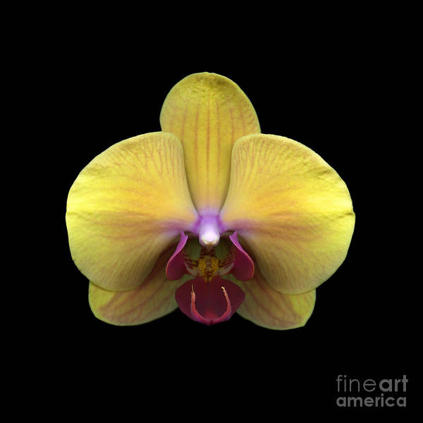 Botanical Art Print featuring the photograph Principessa by Christian Slanec